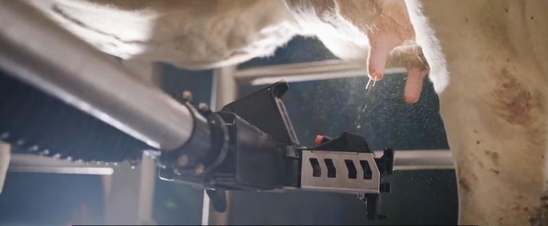 Il sensore 3D supporta il sistema di mungitura completamente automatizzato